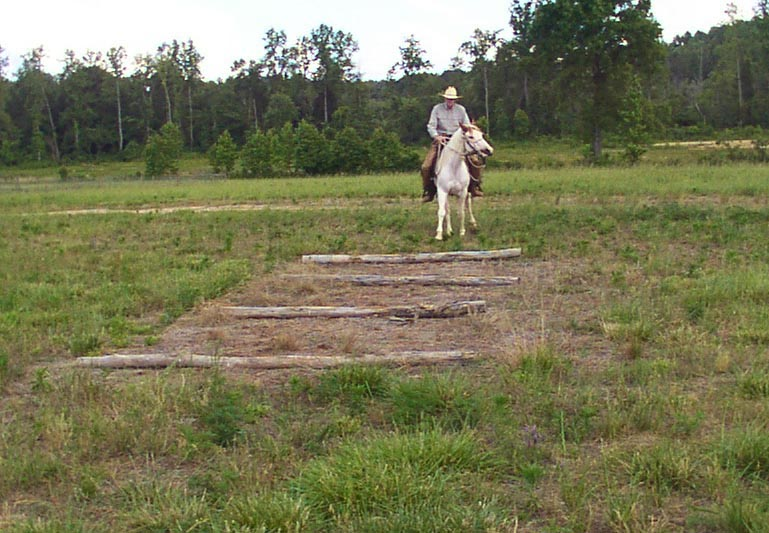 Confidence Course poles obstacles helps horse learn to regulate pace and be aware of obstacle and pace regulation