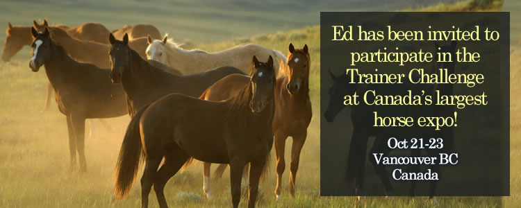 Ed has been invited to participate in the Trainer Challenge at Canadas largest horse expo!
