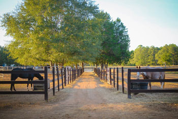 Horse Boarding and Rehab Care